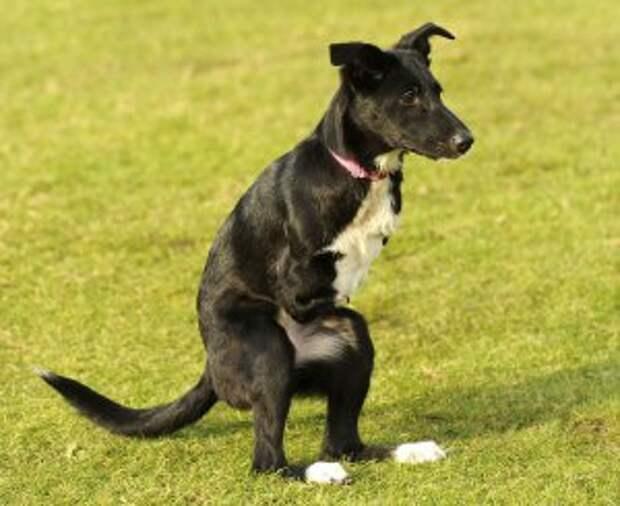 В Румынии живет щенок-кенгуру - фото
