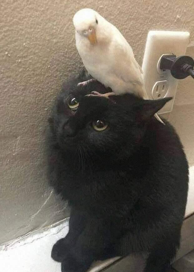 40 очаровательных фото-свидетельств, что черных кошек не стоит опасаться