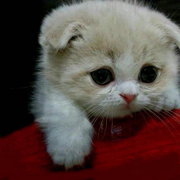 Кошка убежала из дома в поисках лучшей жизни из-за постоянных ссор