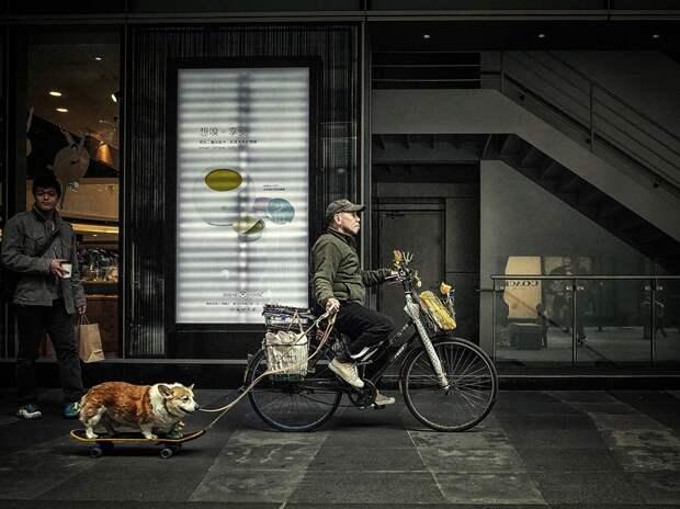 Человек с собакой на доске в Тайбэе