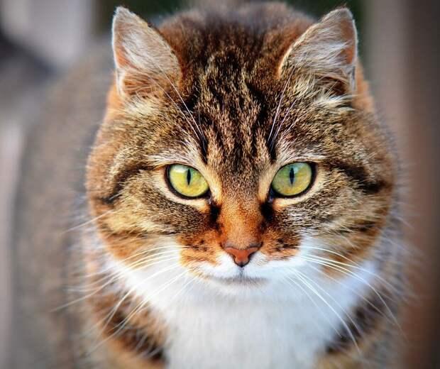 В Савеловском жители собираются мастерить кошачьи дома