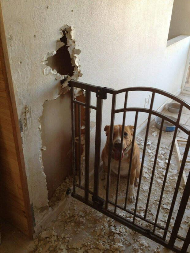 Домашние животные нарушили уют, но ни о чём не жалеют