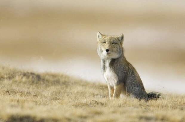 Экзотические животные (38 фото)