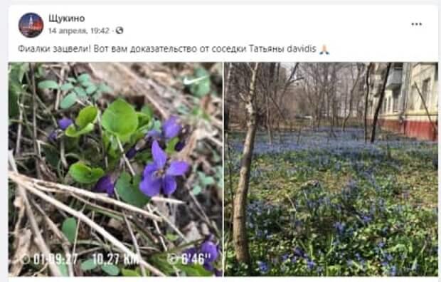 В Щукине заметили поля с фиалками