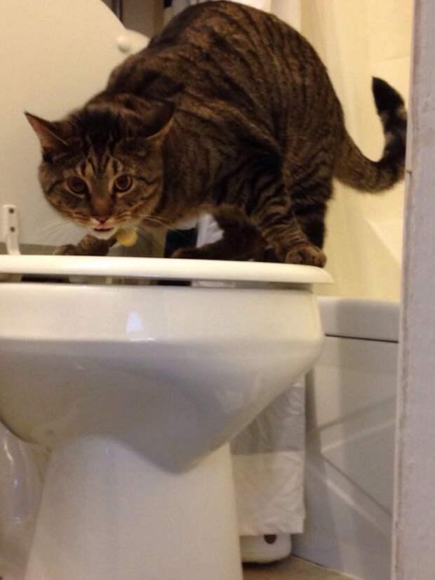 коты хулиганы, кошки пойманные на месте преступления, коты пойманные на месте преступления, коты пойманные с поличным