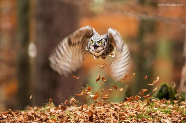 18 фотографий, которыми совы могут гордиться