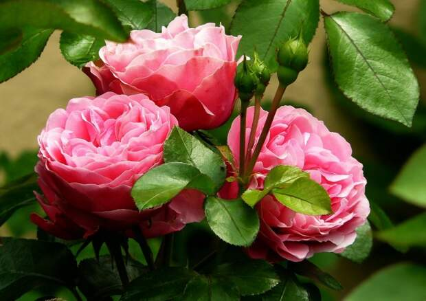 Все цветы лета