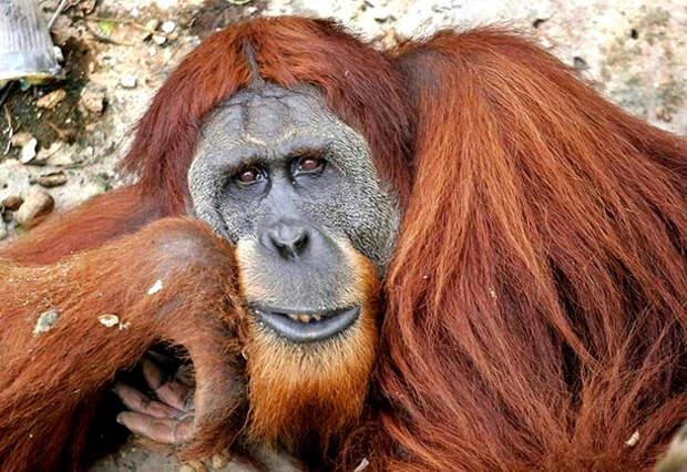 10 видов животных, которых наши дети увидят только на картинках