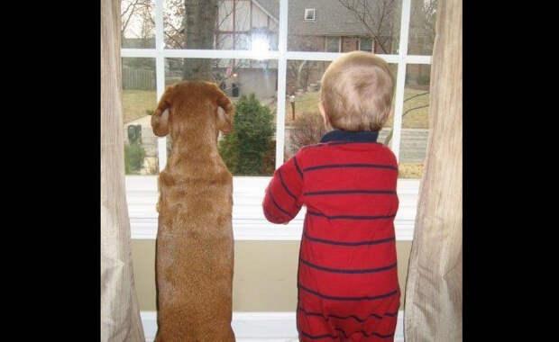 Уморительная реакция малыша и собаки на возвращение папы домой, которая способна растрогать каждого