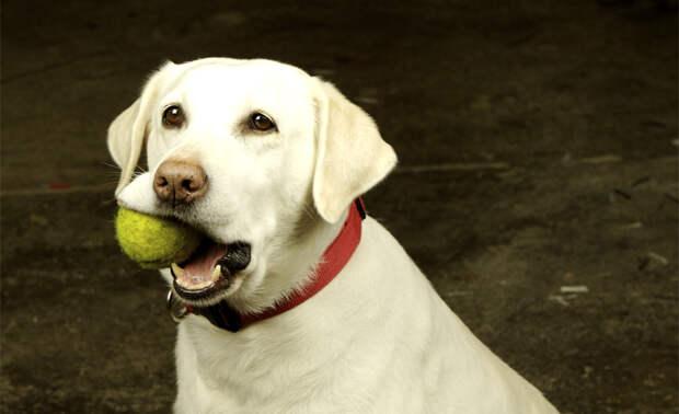 10 лайфхаков, которые должен знать каждый владелец собаки