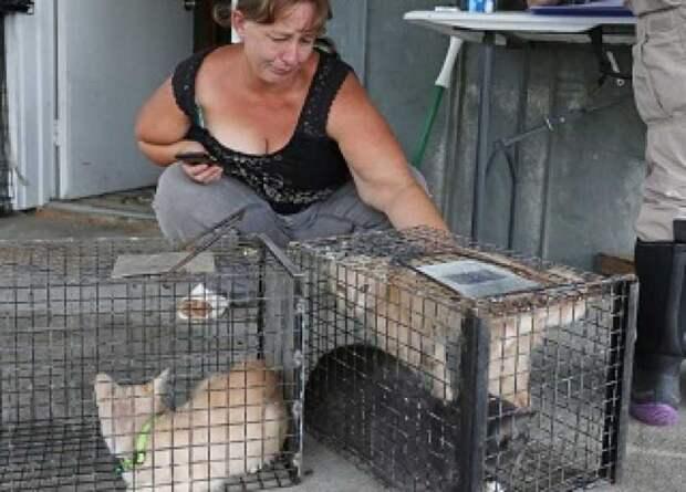 Женщина спасла от разгула стихии 27 кошек и собак и попала за это в тюрьму