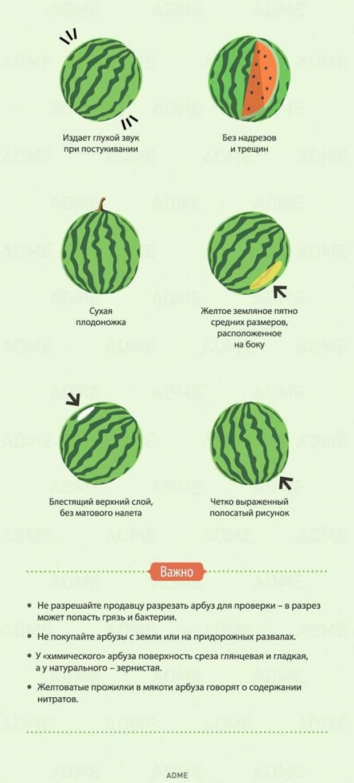 8 признаков хорошего арбуза