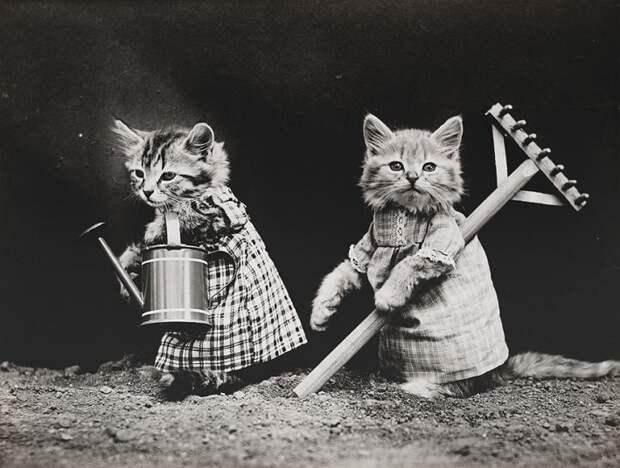 Столетние котики в гостях у Михалыча