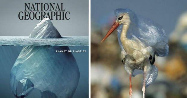 Самое страшное внутри: что скрывает обложка нового номера журнала National Geographic