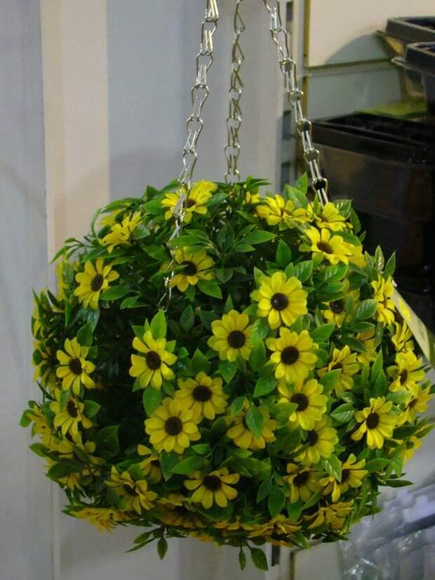 Желтые цветы в типиарии