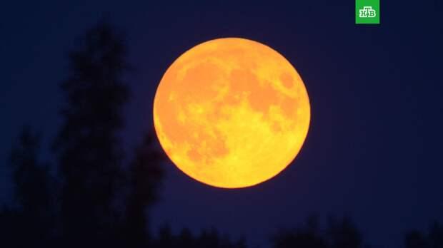 Жители Земли наблюдали «клубничное» суперлуние