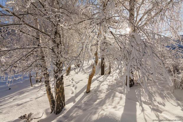 Сказка Алтайской зимы