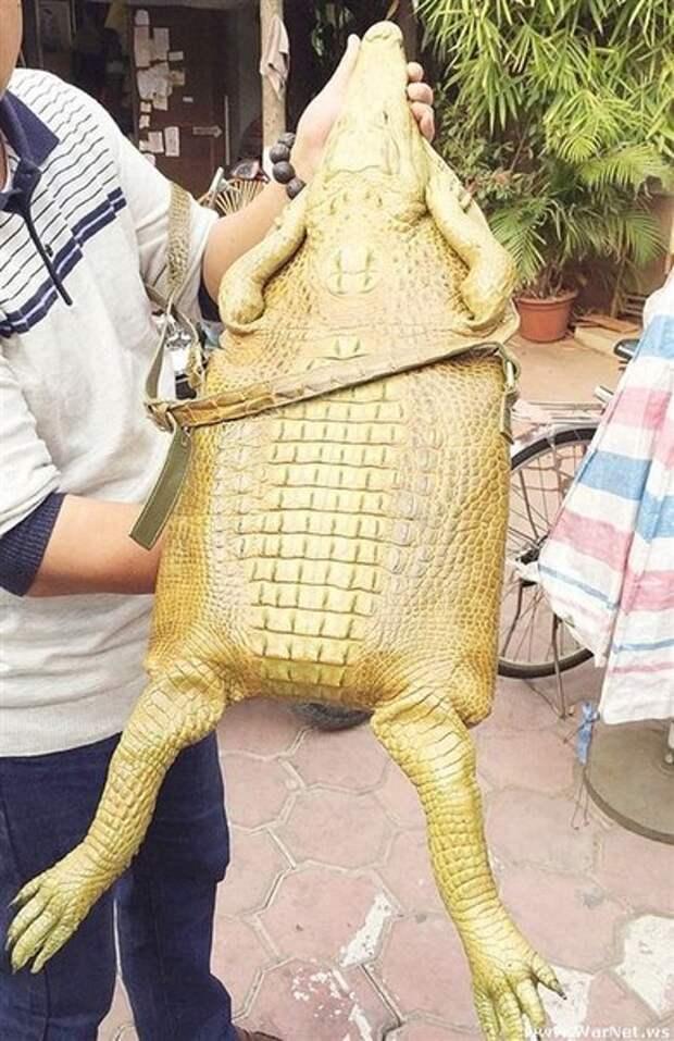Сумка из натуральной кожи крокодила