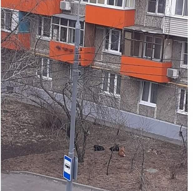 Под балконами на Малахитовой собаки устроили  зону отдыха