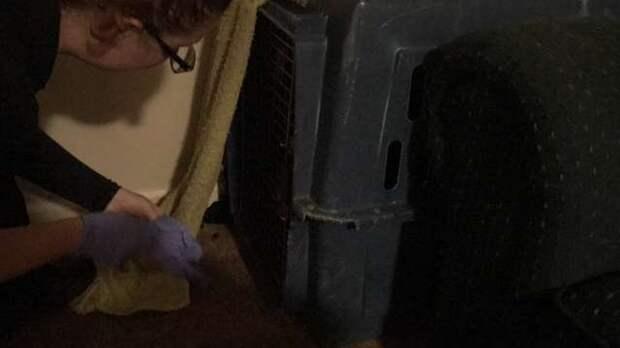 женщина нашла контейнер