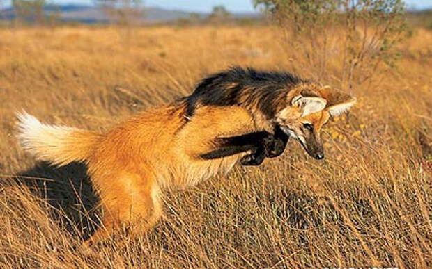 ТЕРЕМОК. Странные животные с удивительными адаптациями
