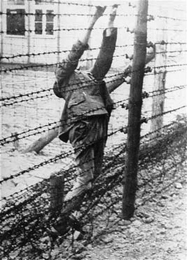 suicideatmauthausen.jpg