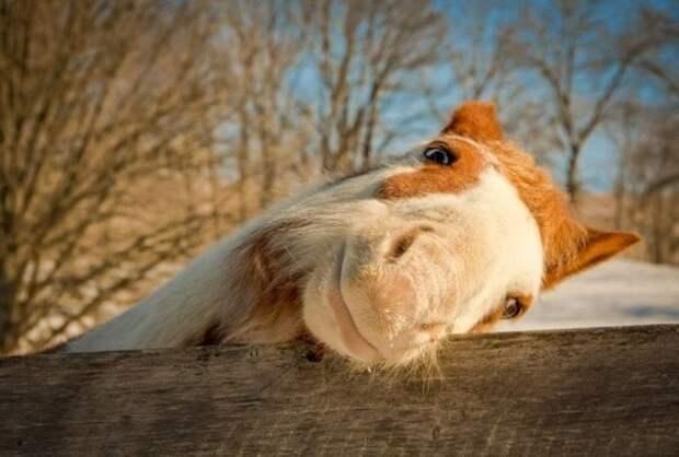 Забавные животные в любительских фото