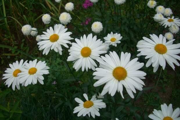 Практично: сеем цветы под зиму!
