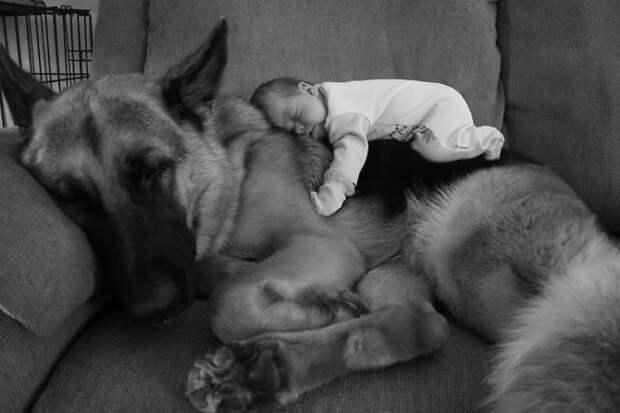 ТЕРЕМОК. Маленькие дети и их большие собаки