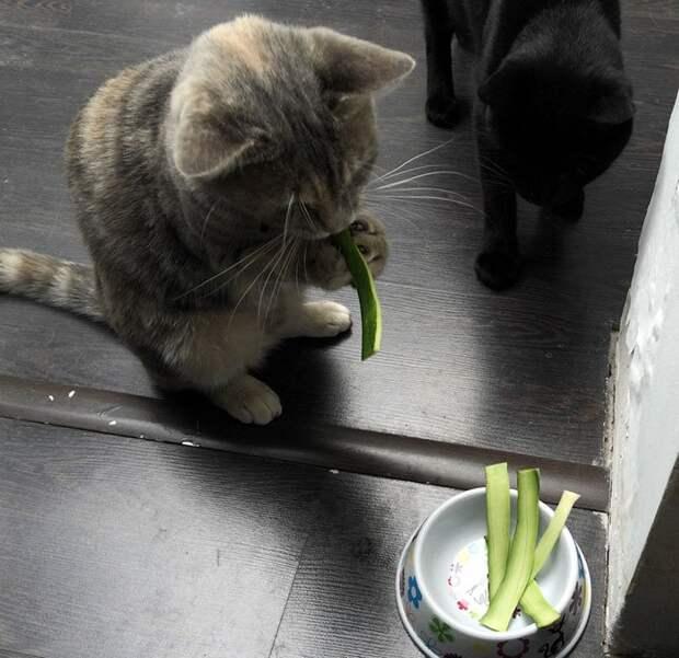 кошка ест цуккини