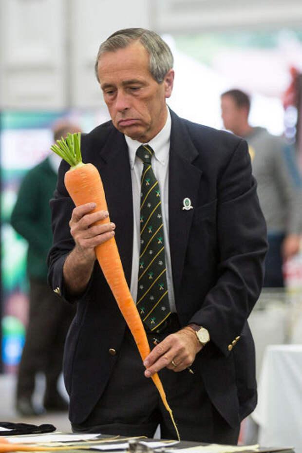 Огромная морковь
