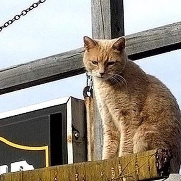 Жители Аляски в пятнадцатый раз избрали кота мэром города.