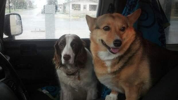 12. Опытный и новичок ветеринар, животные, милота, собаки