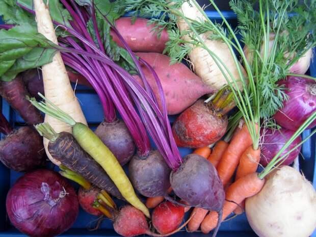 Убираем морковь, свеклу и пастернак