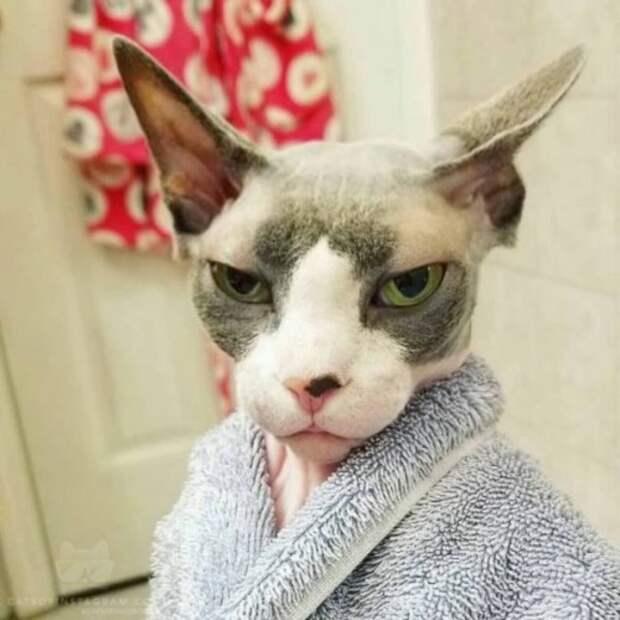 Субботний котопост коты, кошки, приколы с котами., смешные коты
