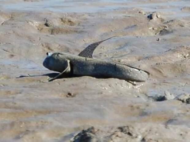 Живучая рыба ланг. 5 коротких фактов о природе