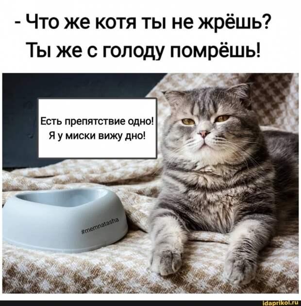 3085196_kotikk (687x700, 292Kb)