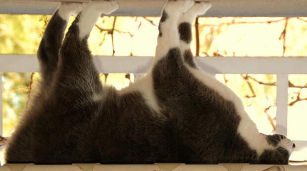 4.  кот, поза
