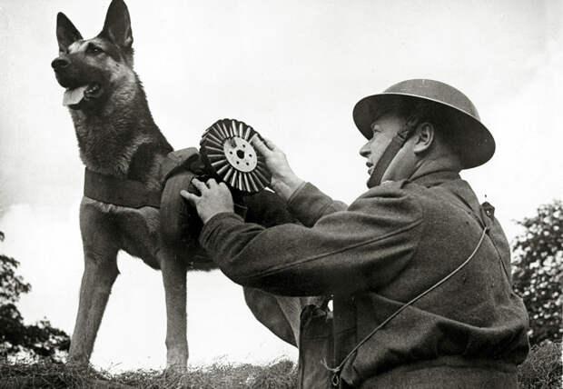 2. Собаки с минами в советской армии. Боевые животные, животные, история