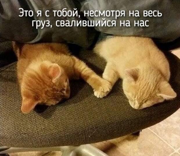 это я и кот