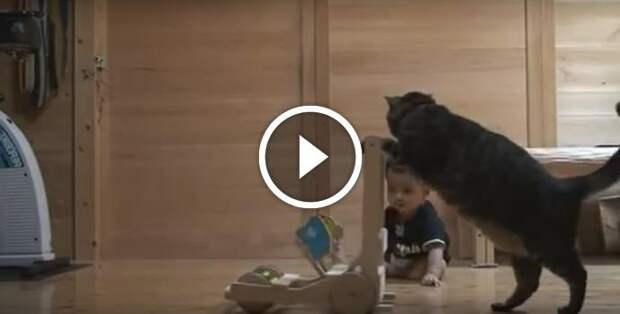 Умная кошка пытается научить ребенка ходить