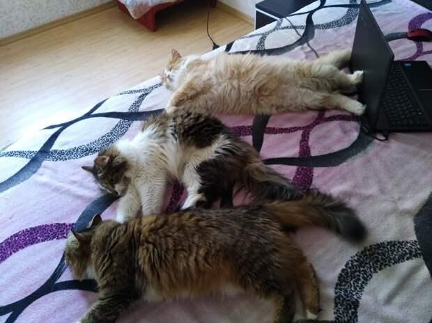 Однажды мне в сумку на остановке подкинули троих новорождённых котят...