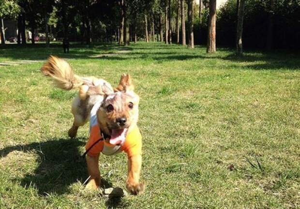 Неравнодушные люди спасли щенка, облитого кипятком хозяином