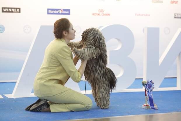 Муди, комондоры, шелти, самоеды: в Москве прошла крупнейшая выставка собак «Евразия 2021»