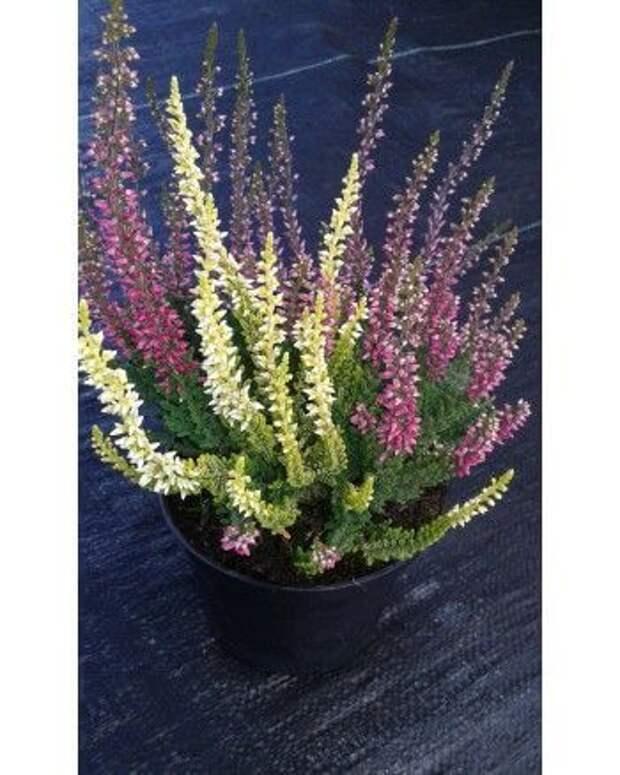 Травяной гороскоп. Лечебные травы и 12 знаков Зодиака. Какое ты растение?