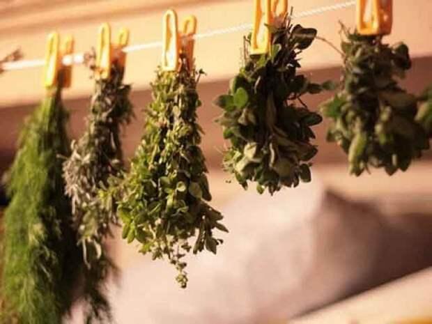 Растения применяемые при заболеваниях органов дыхания
