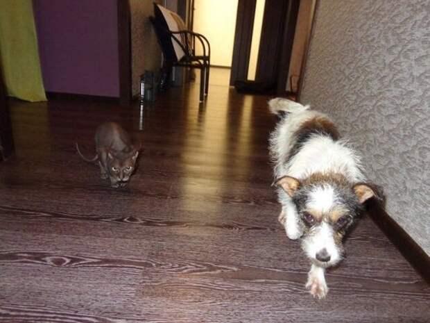 Чахлая собачка преобразилась, когда нашла дом дворняга, маленькая собака, новосибирск, преображение, собака
