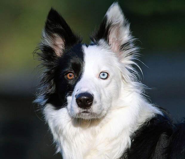 different-eye-color-heterochromia-16__700