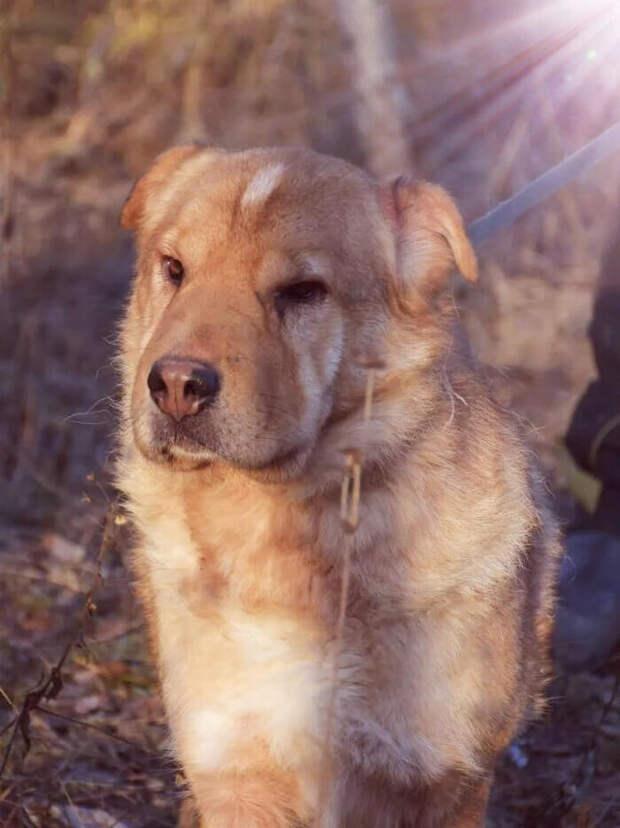 Собака породы шарпей была оставлена на улице, я не смог пройти мимо и решил ей помочь.