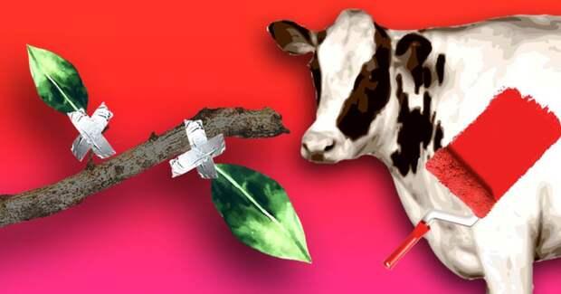 Ученые красят коров и клеят листья к веткам: 8 странных научных экспериментов